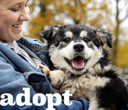 "Woman smiling while holding a puppy with text ""adopt"""
