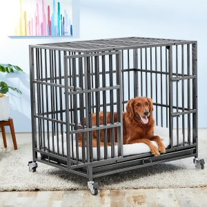 Dog laying down in a steele crate